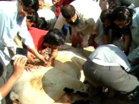 KHATRI_(Malwa House) Eid-ul-Adha (2009) 1st Day Sacrifice_Part3