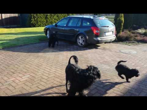 Special Moments! Portuguese Water Dogs