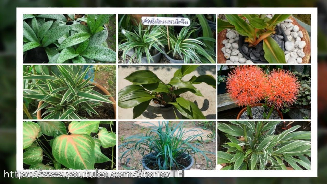 9 ต้นไม้มงคล ที่ทุกบ้านต้องมี ใครปลูกไว้จะโชคดี เตรียมตัวรวย