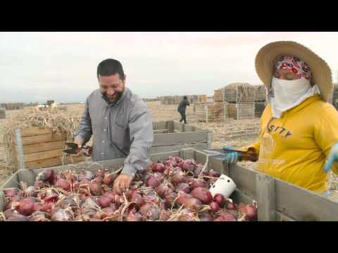 Artisan Red Onions; Farm to Table