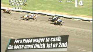 How To Wager: Wagering Basics
