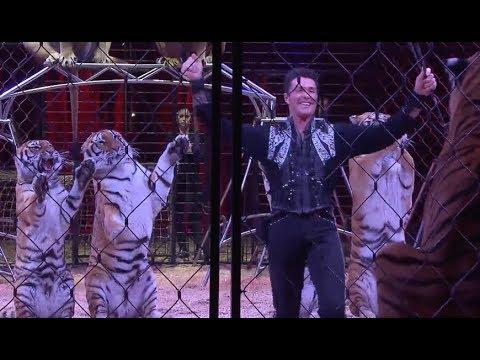 Sind Tiere im Zirkus noch zeitgemäß?