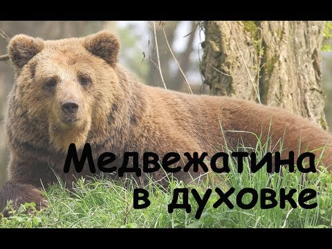 Как приготовить ребра медведя