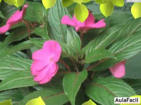 Jardineria plantas con flores introducci n jardiner a for Jardineria y plantas