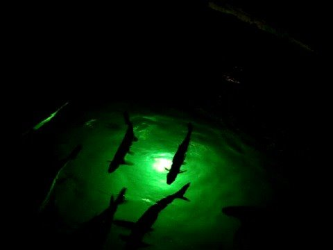 underwater fish lights snook light tarpon underwater dock lights, Reel Combo