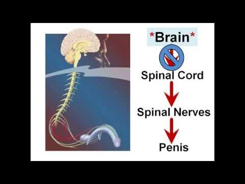Porn-Induced Erectile Dysfunction