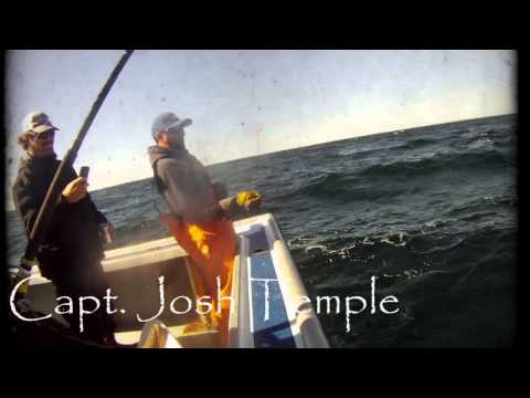 Giant Bluefin Tuna Fishing - Team Pelagic, Nova Scotia 2012