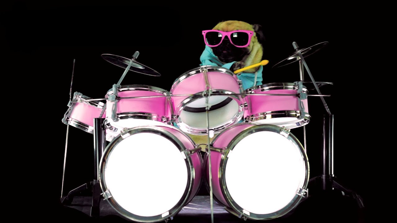 Dog Is Playing Drums Drum Solo Youtube