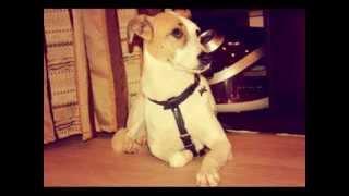 Абби - собака в дар!