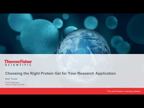 Choosing The Right Protein Gel For Your Research Application
