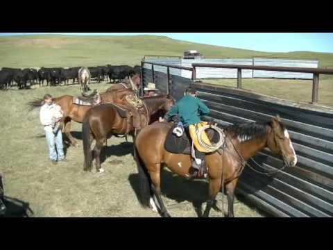 Echo Farm and Cattle LLC - Branding 2016
