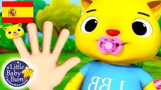 Canciones Infantiles | Familia de Dedos | Dibujos Animados | Little Baby Bum en Español