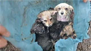 Rescue 4 Pups Abandoned In A Sack and Finally Found Sweet Forever Home