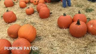 Pumpkin Picking (Queens Farm, NY)