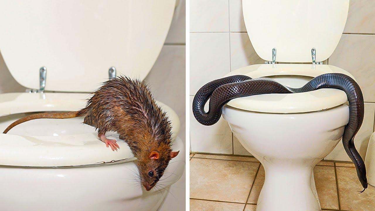 4 животни кои лесно може да се појават во тоалетот
