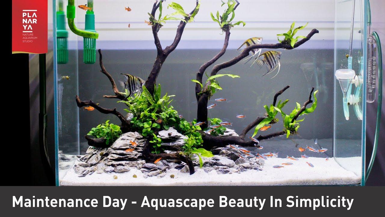 Aquascape Ideas Aquascape Maintenance