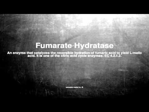 Medical vocabulary: What does Fumarate Hydratase mean