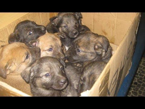 На свалке стояла заклеенная картонная коробка. Мужчина открыл ее и увидел собаку и 9 щенков