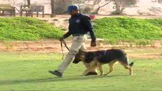 German Shepherd Behavior Modification  Training