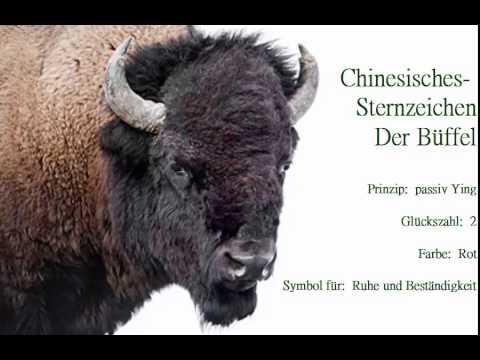 Chinesisches Sternzeichen- Der Büffel - YouTube  Chinesisches St...