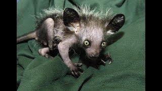 ТОП 15 самых страшных животных мира.