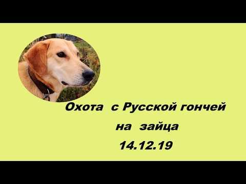 Охота на зайца с Русской гончей  14 12 19