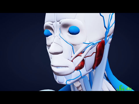 Video image: 7 organs you could live without
