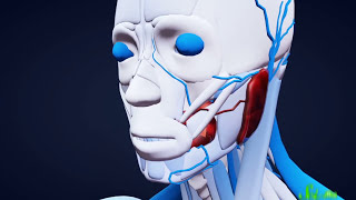 7 Organs You Could Totally Live Without thumbnail