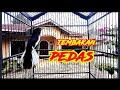 Kacer Gacor Tembakan Pedas Pancingan Kacer Cepat Gacor  Mp3 - Mp4 Download