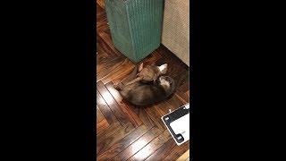 Twiter:https://twitter.com/love_otter_love 爆笑!カワウソの妖精 ...