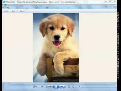 Batch export PostgreSQL BYTEA (BLOB) data to files