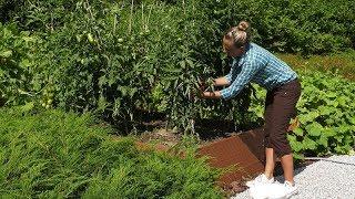 Ogród warzywny w marcu. Rozsady pomidorów i papryki.