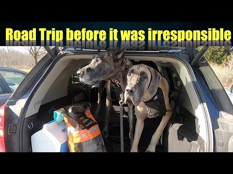 Road Trip before it was irresponsible while my two Great Danes hit the pet lodge  social distancing