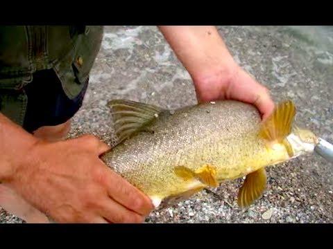 рыбалка на куртах алматы
