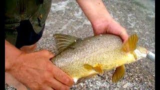 Много рыбы! Сама идет на спиннинг!!!! 🎣