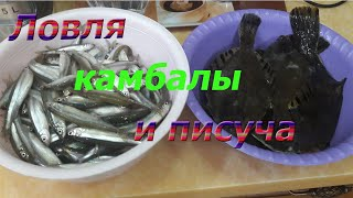 Рыбалка на Тавричанке и Почехезе ловля камбалы и писуча корюшка Приморский край 2020г
