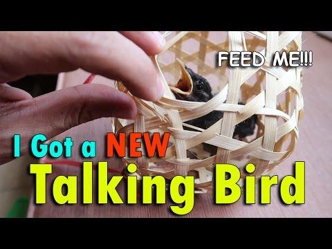 OMG! I GOT A NEW TALKING BIRD!   May 15th, 2017   Vlog #115