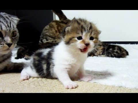 Too  Cute Cats and  Kittens videos Compilation