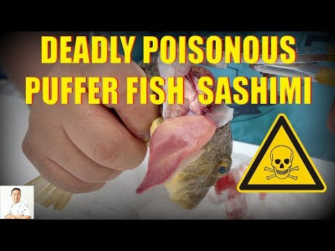 POISONOUS Fugu Puffer Fish Sashimi | Catch, Clean, Cook and Slice