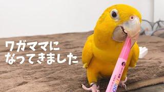 鳥を知らない人に、鳥の可愛さを知ってほしい。 鳥好きな人と、可愛さを共有したい。 幸せな鳥が増えることを心から願っています。 きいさん...