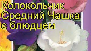 Колокольчик средний Чашка с блюдцем. Краткий обзор, описание характеристик, где купить семена