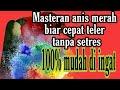 Burung Anis Merah Teler Anis Merah Jantan Pasti Makin Ngeplong Teler  Mp3 - Mp4 Download