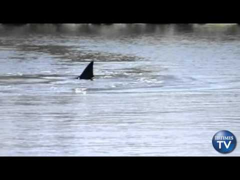 Dolphin Trapped In California Wetlands