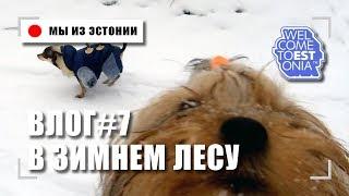 Собаки в Снежном Лесу Новая Камера Osmo Море Зимой