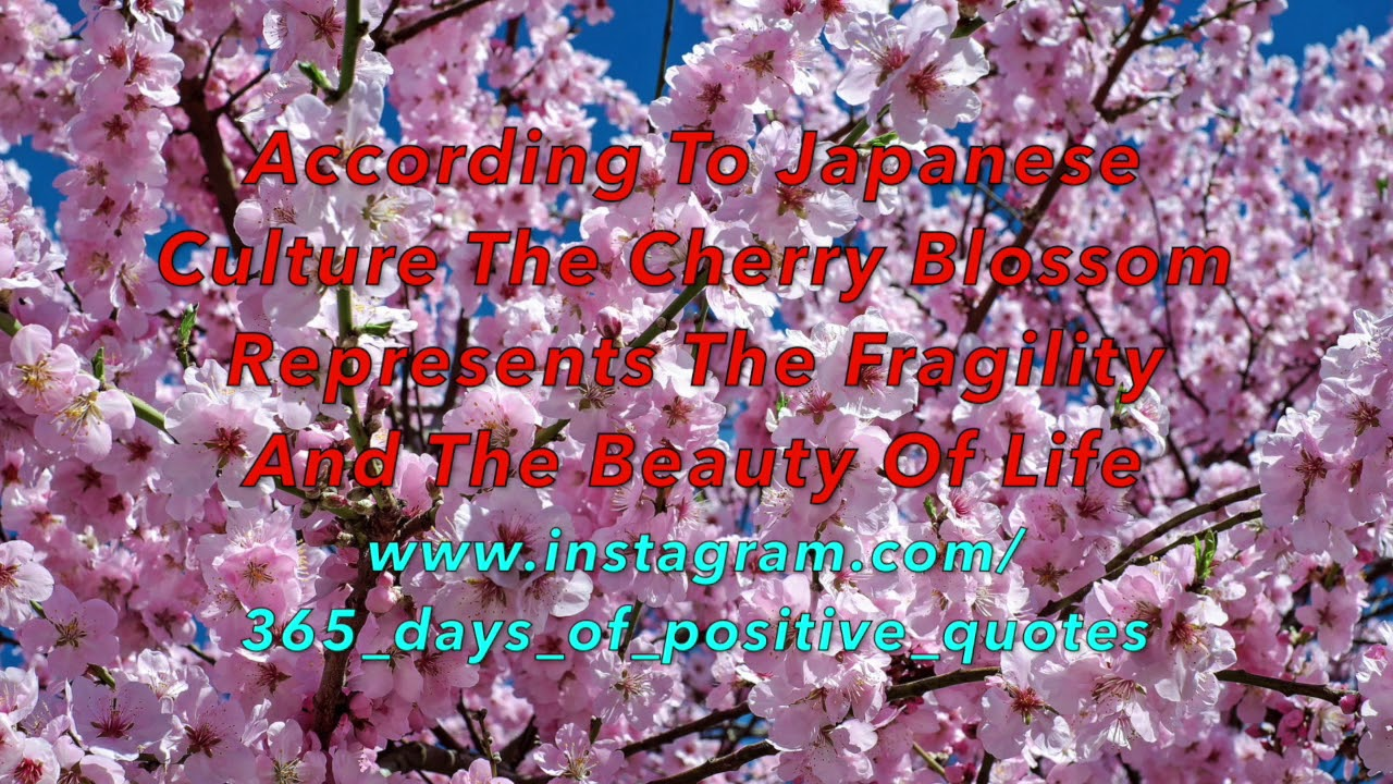 Cherry Blossom Inspirational Quotes 30 March Life Quotes