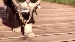 2 видео про кота в очках