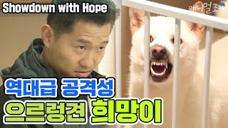 [ENG SUB]Showdown with extremely aggressive 'Hope'[Dogs are incredible][It like a Cesar`s show]