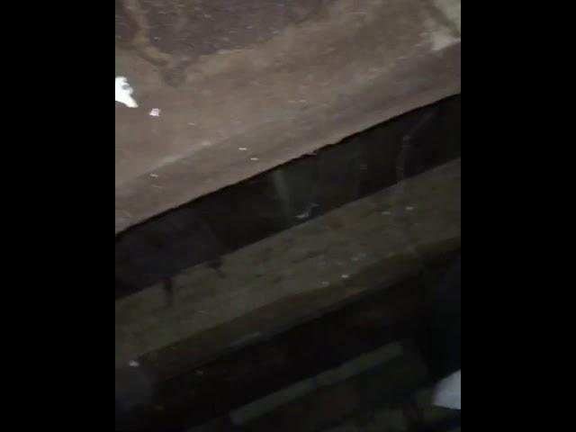 Termite damage to a subfloor area - eating hardwood