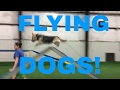 Our Dogs Can FLY    Dog Training Life   VLOG 02
