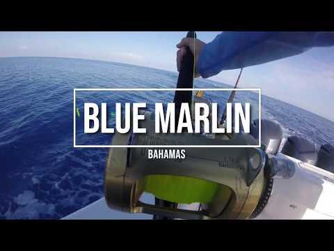 BLUE MARLIN Fishing In Bahamas